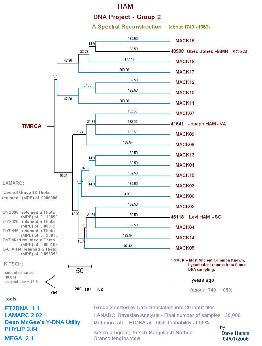 HAM DNA Group 2 Reconstruction Phylogenetic tree